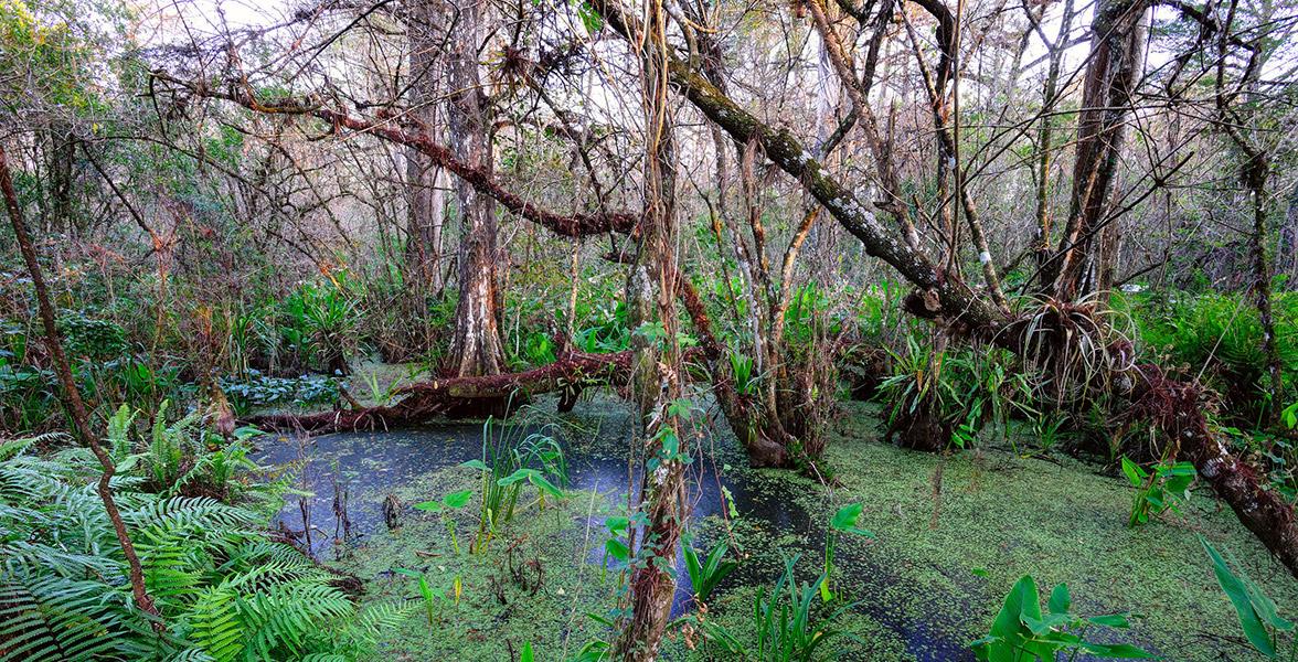 Corkscrew Swamp. Photo by RJ Wiley.