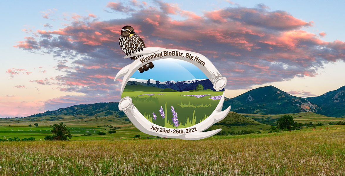 The Wyoming BioBlitz logo on top of a photo of sunset over the Big Horn Mountains.