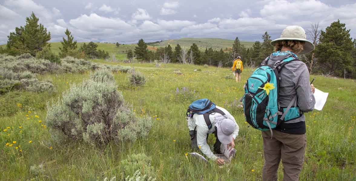 Wyoming BioBlitz 2018. Photo: Evan Barrientos/Audubon Rockies