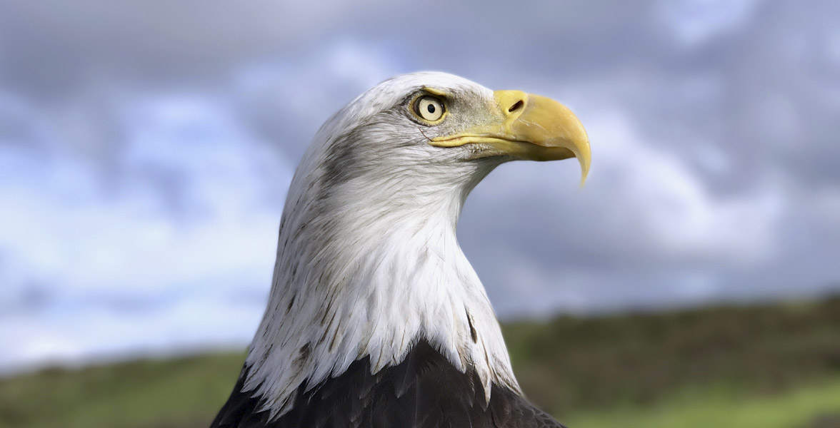 Bald Eagle. Photo: Dave Wilson/Audubon Photography Awards