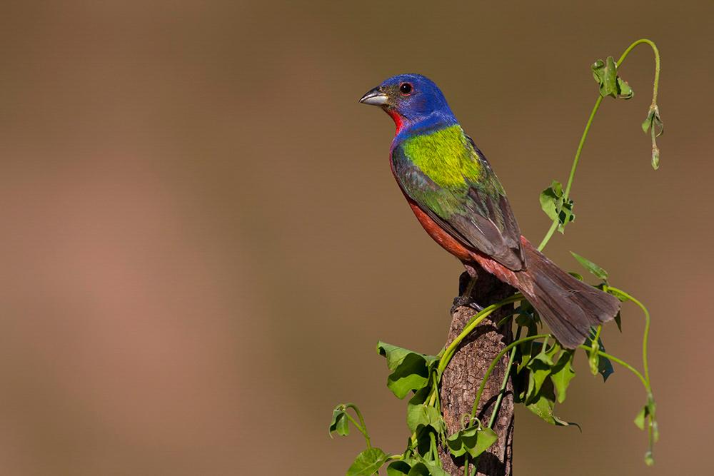 https://fl.audubon.org/news/asamblea-virtual-de-audubon-florida-2020
