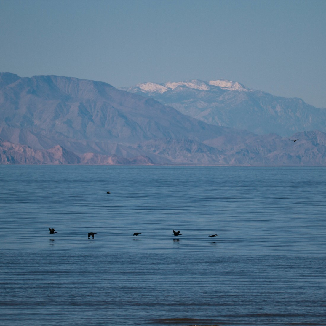 Double-crested Cormorants fly over a wide expanse of the Salton Sea, with mountains in the distance - some with snow on the peaks.