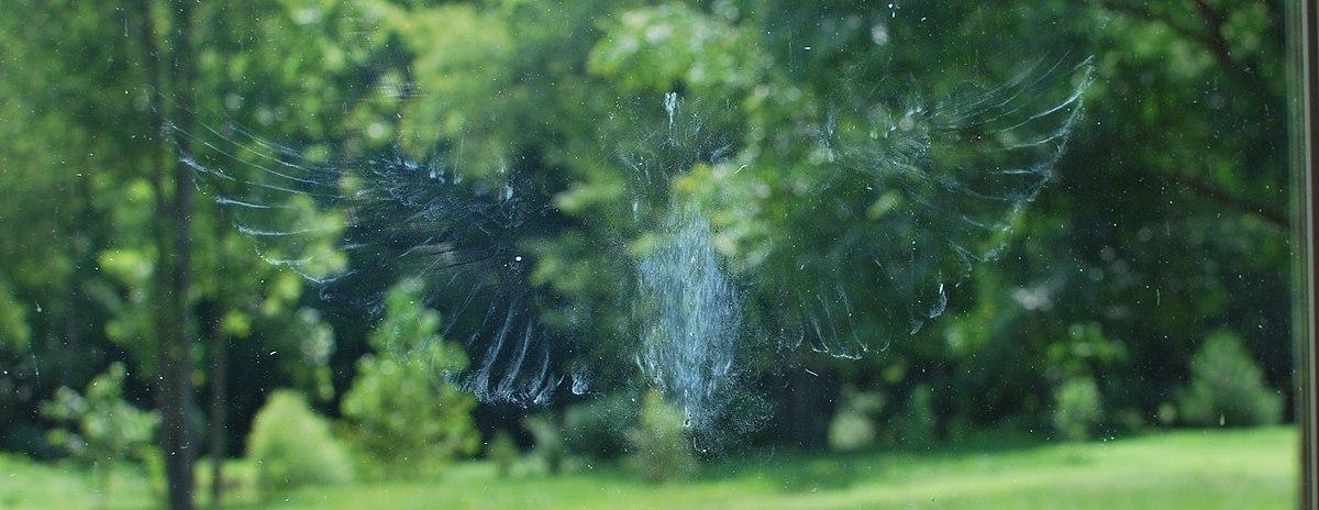 Bird Imprint on Window Pane