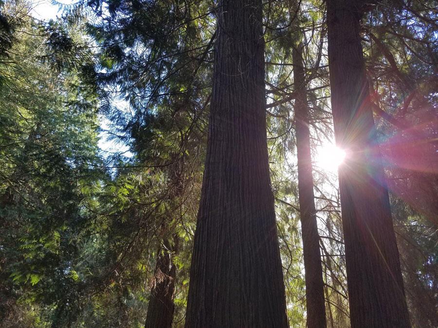 Seward Park Forest