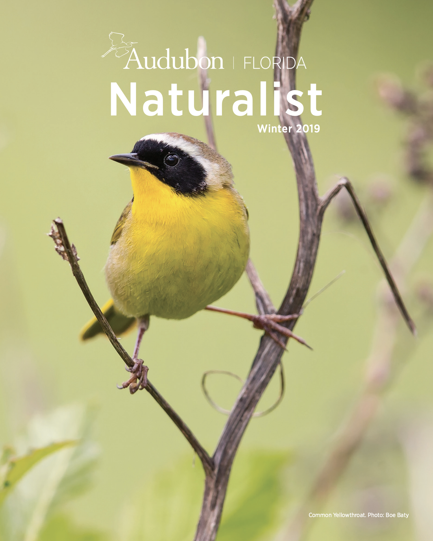 Common Yellowthroat. Photo: Boe Baty.