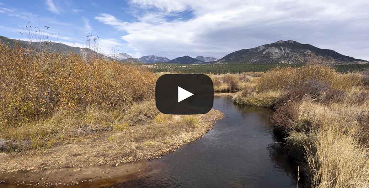 A stream runs through a montane wetland.