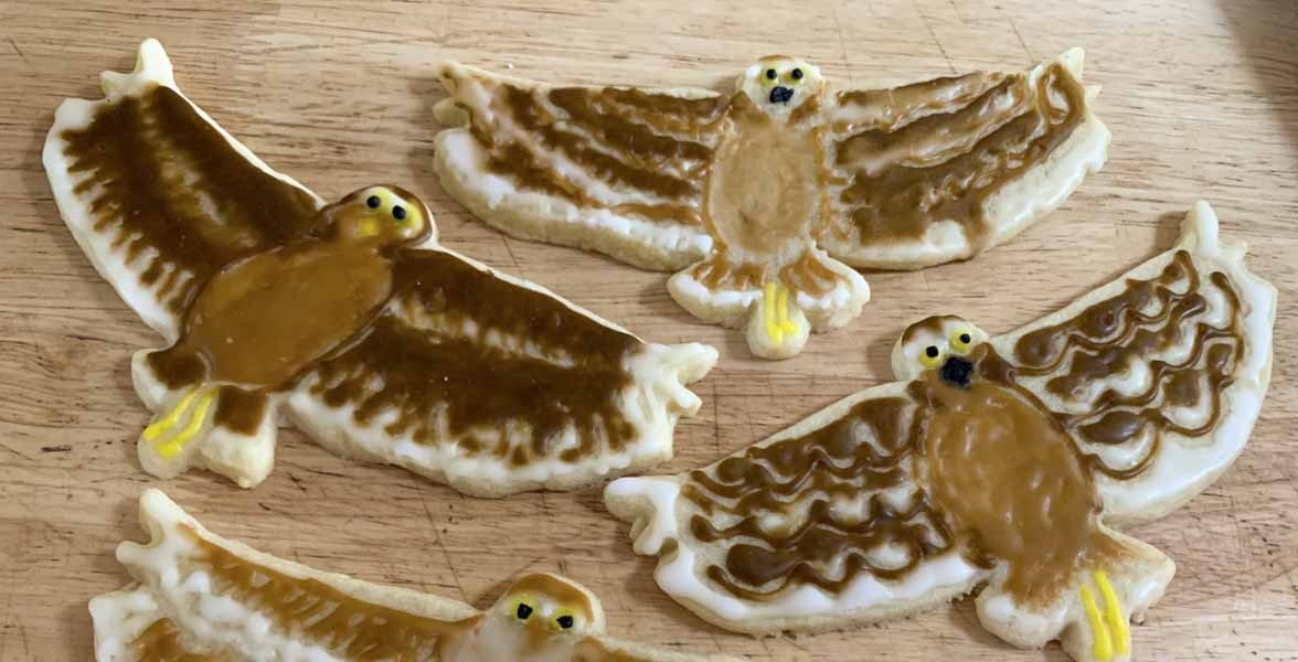 Cookies decorated like Burrowing Owls.