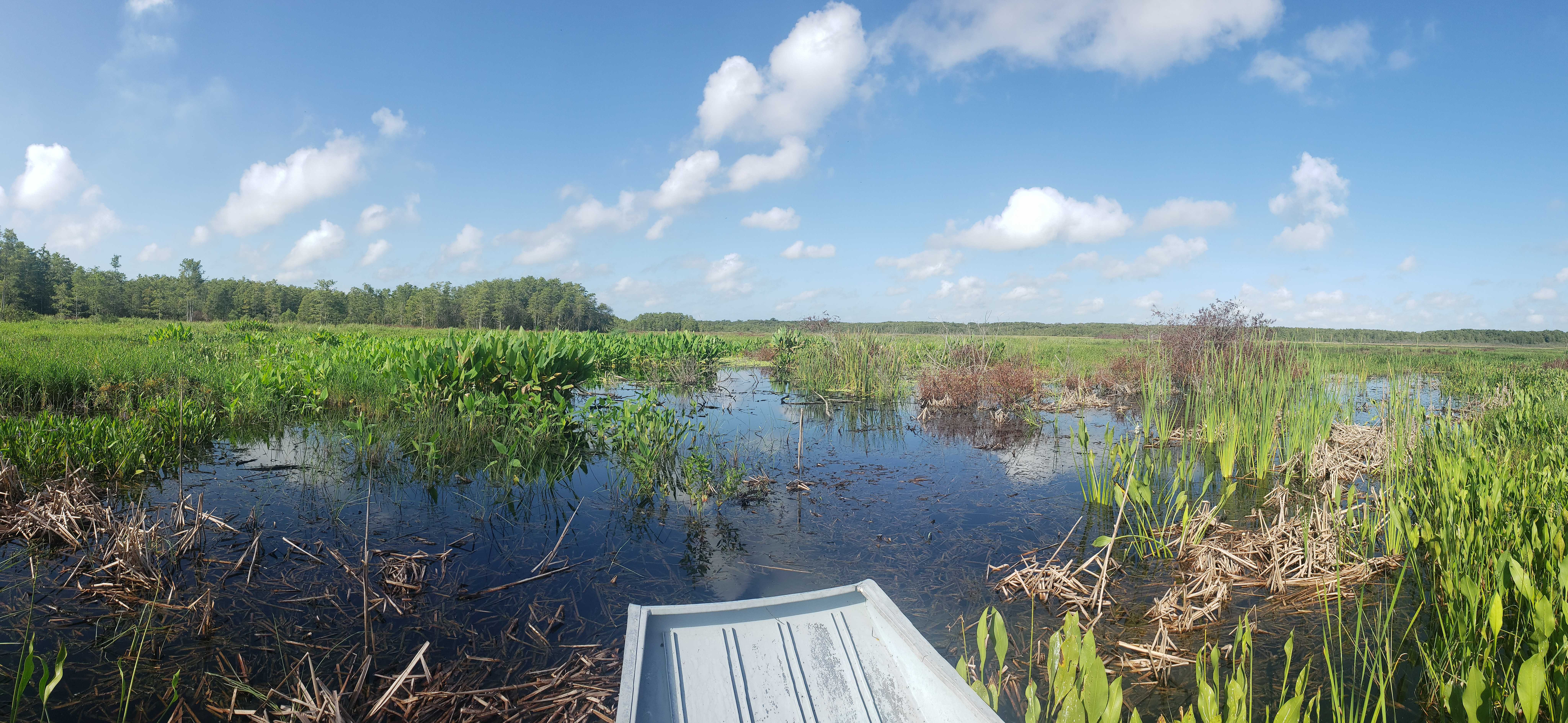 A view of a wetland