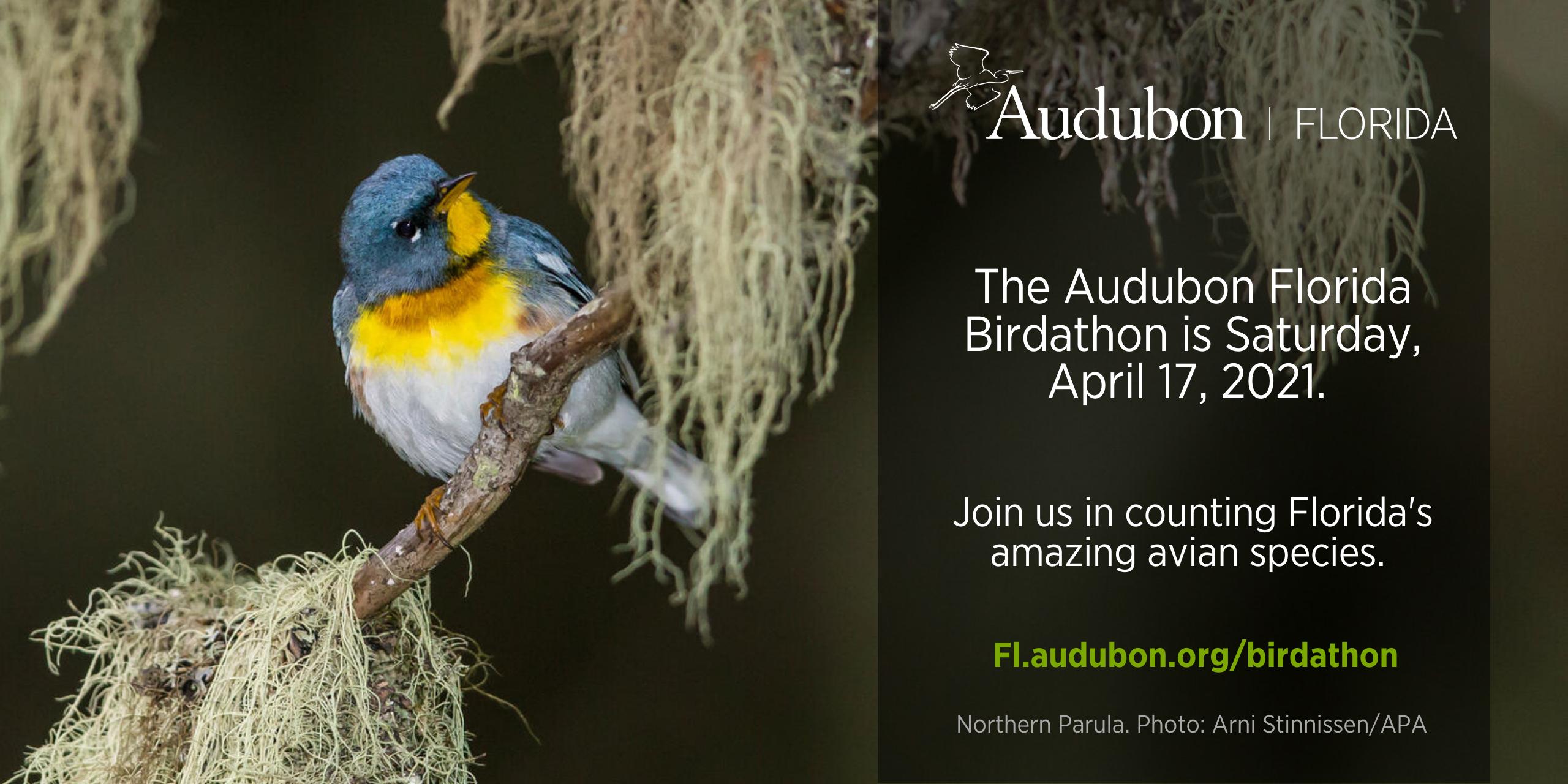 Birdathon promo