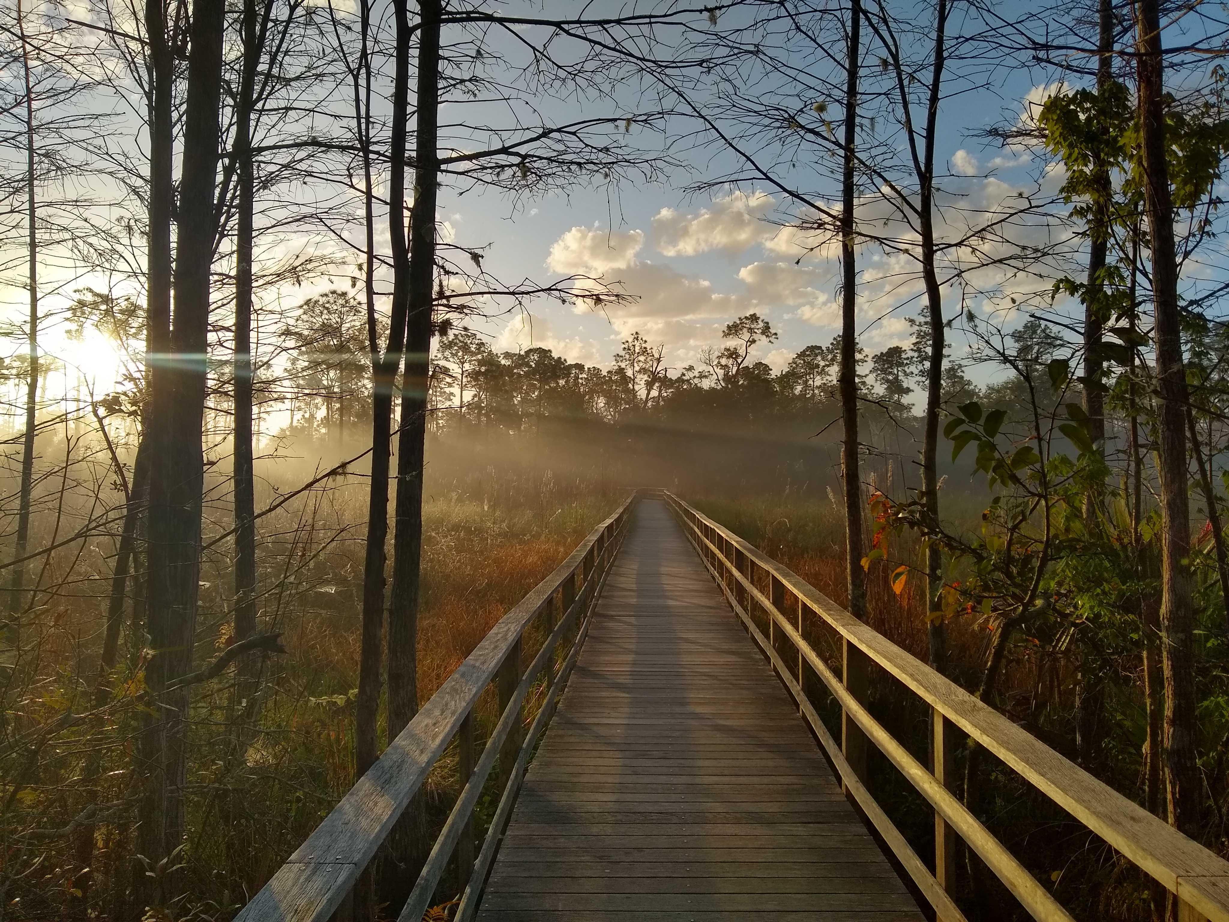 Misty morning on the boardwalk.