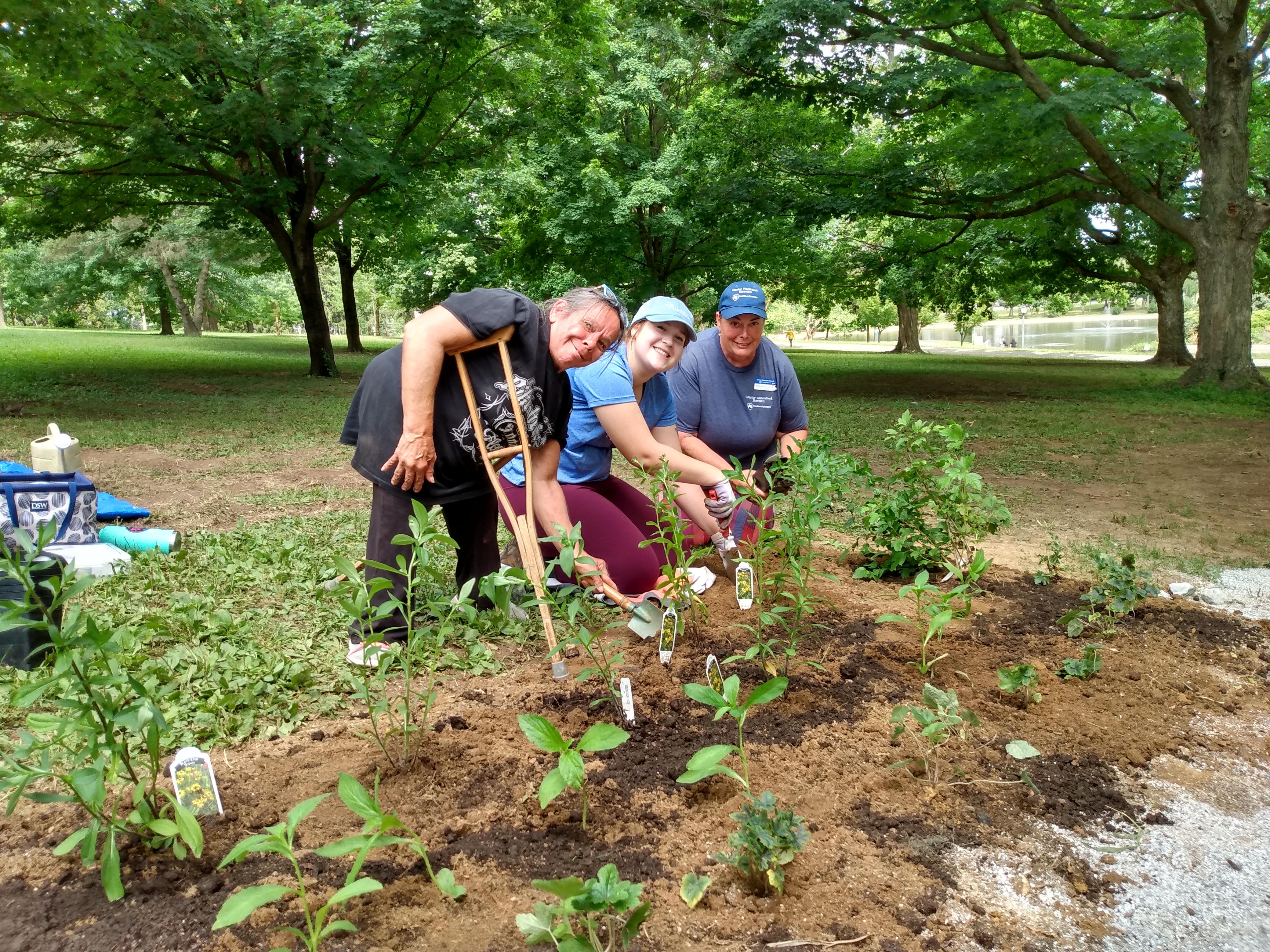 Volunteers plant natives in York