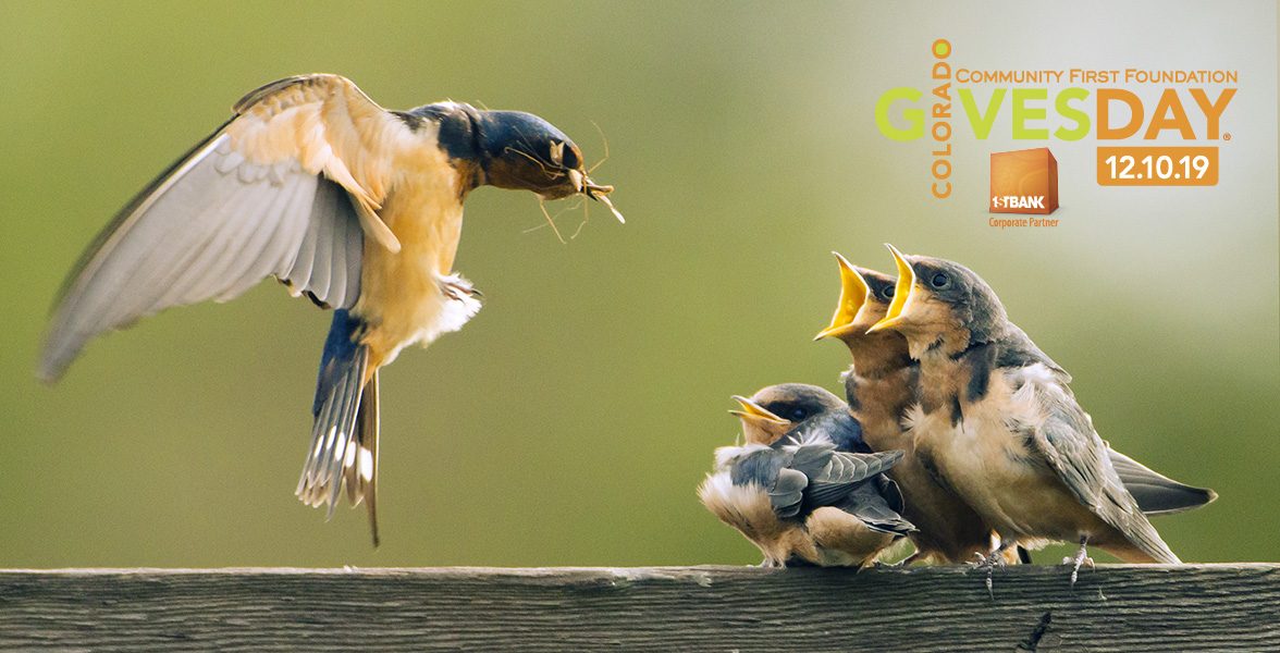 Barn Swallows. Photo: Alan Peterson/Audubon Photography Awards