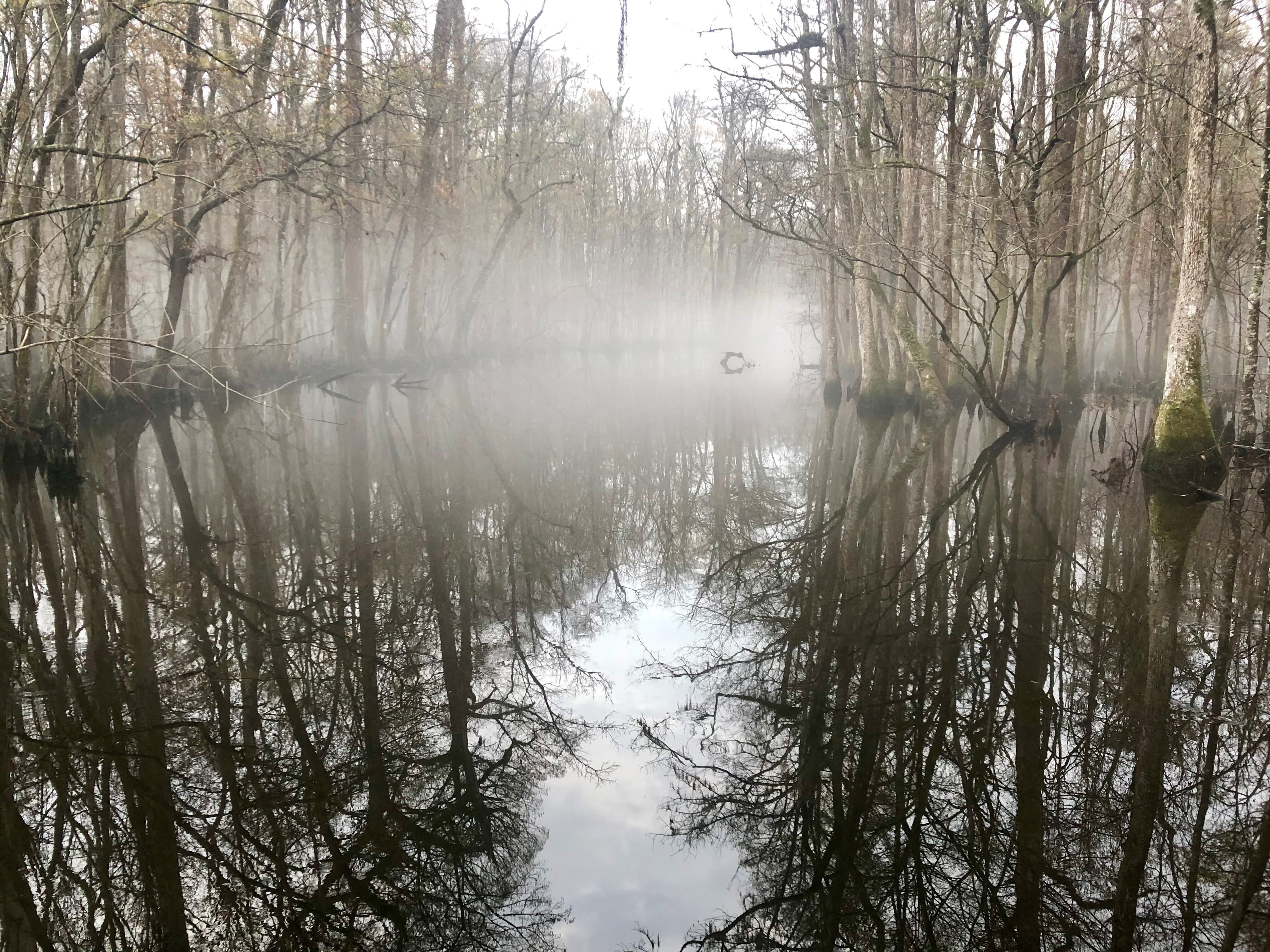 Fog over a mirroring lake