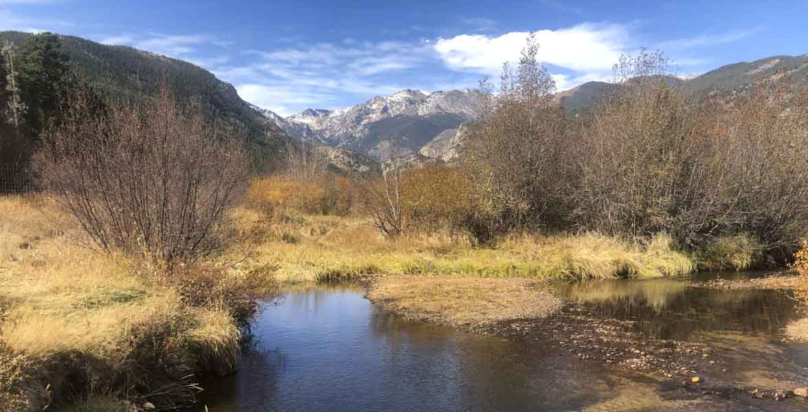 A montane stream surrounded by willows.