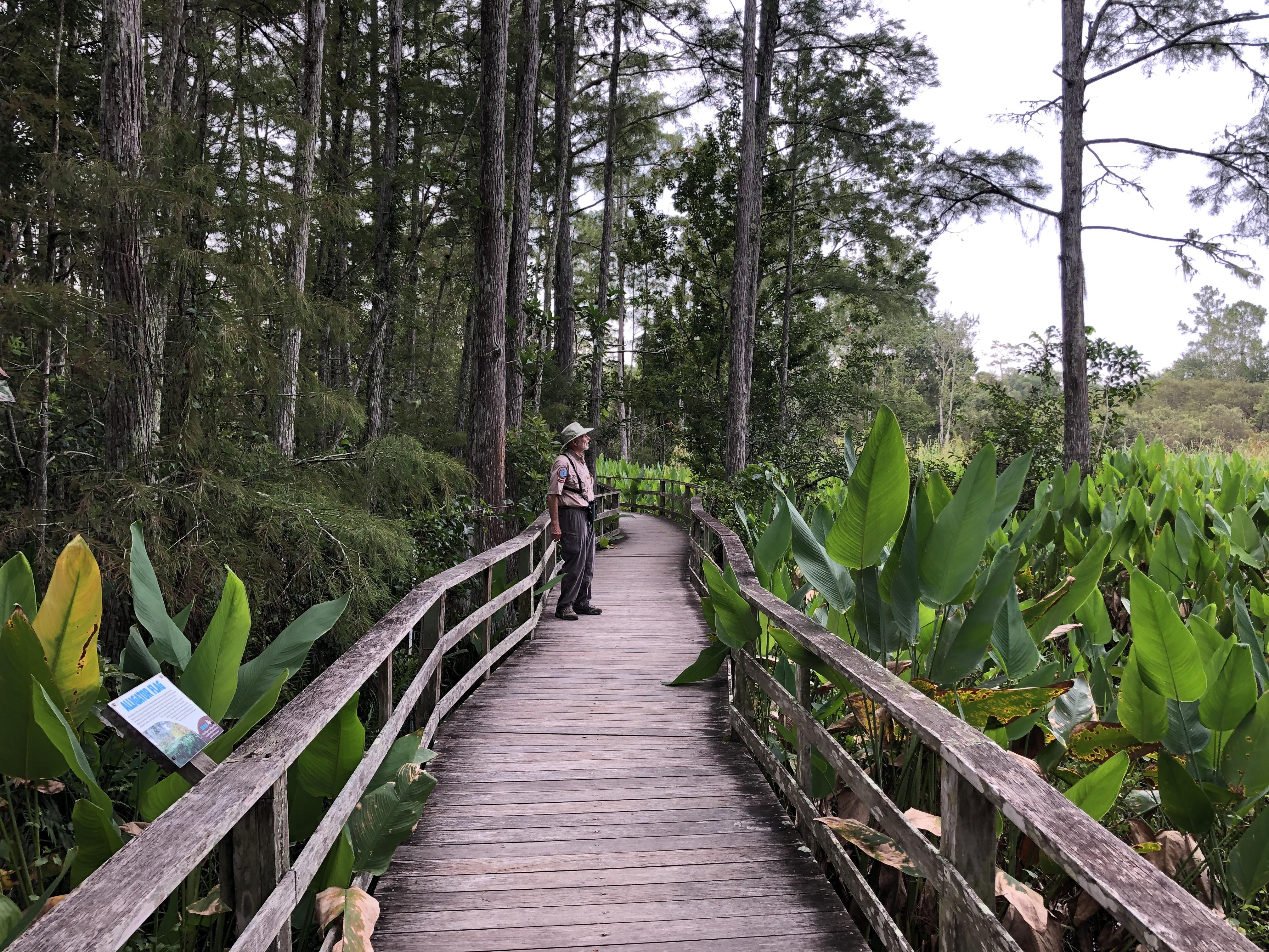 Volunteer naturalist on the boardwalk.