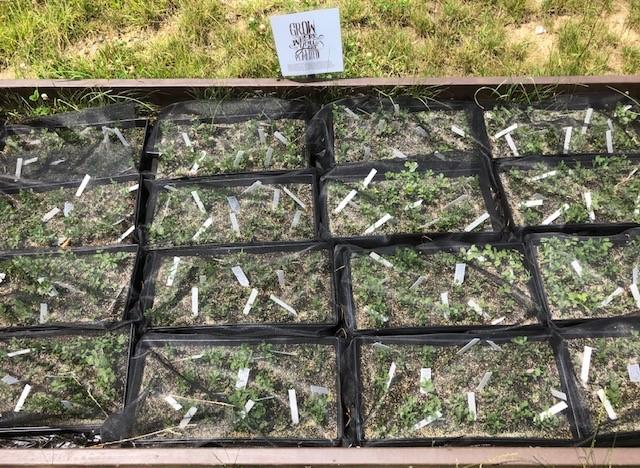 Foster Plants