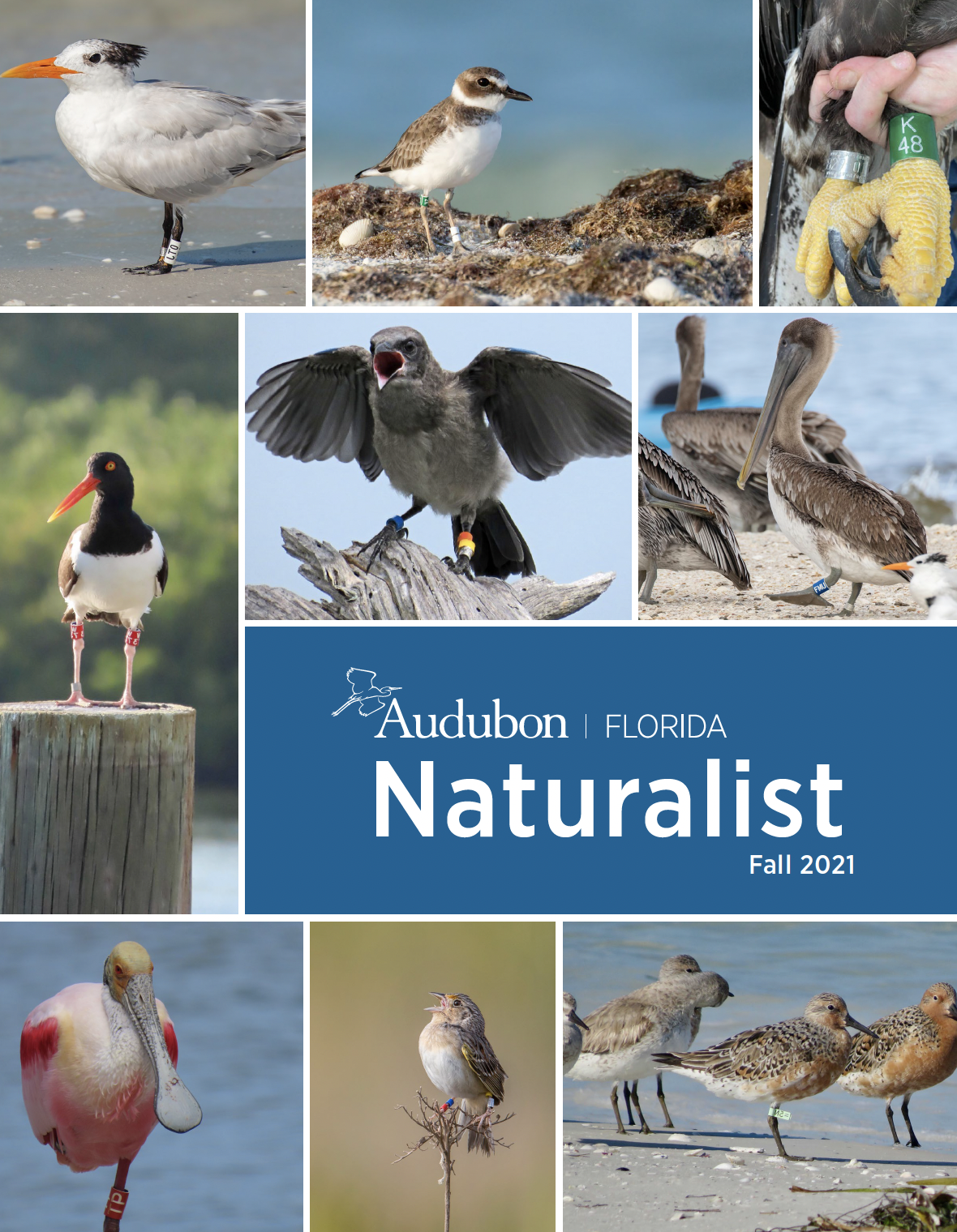 cover of the Naturalist showing a series of banded birds.