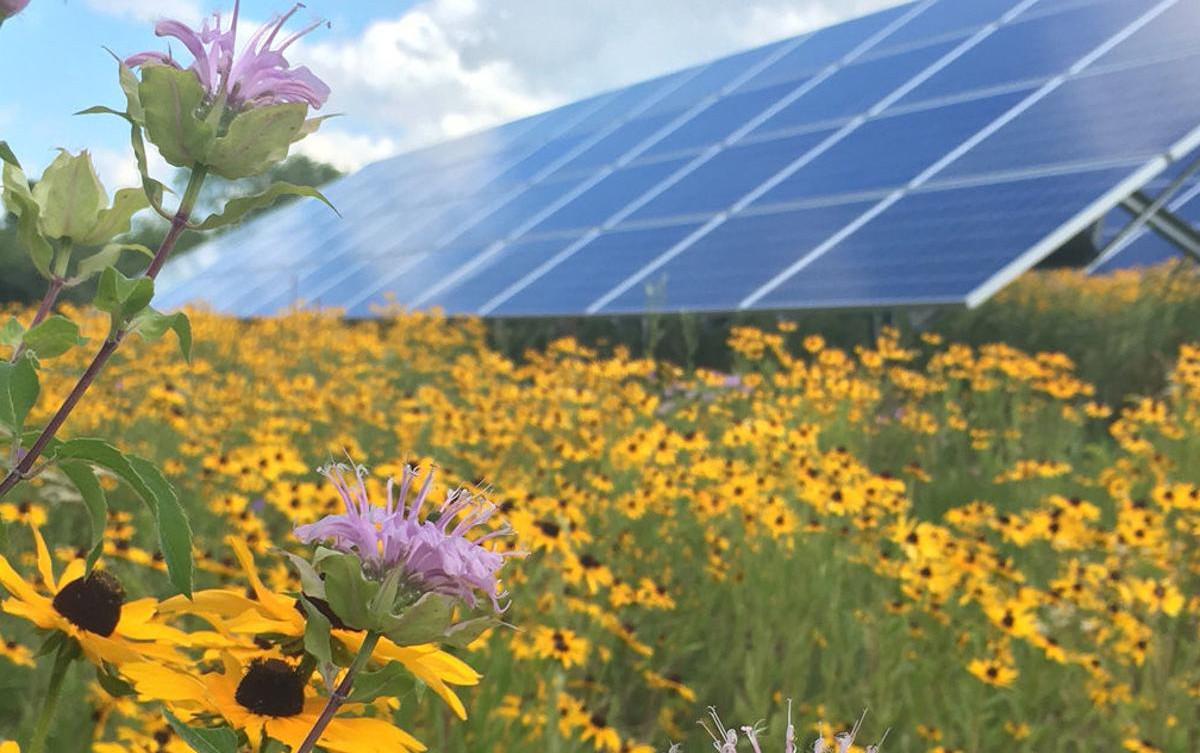 solar planting site