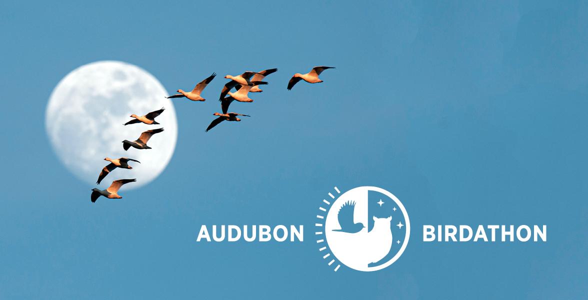 Audubon Mid-Atlantic Birdathon - May 15th
