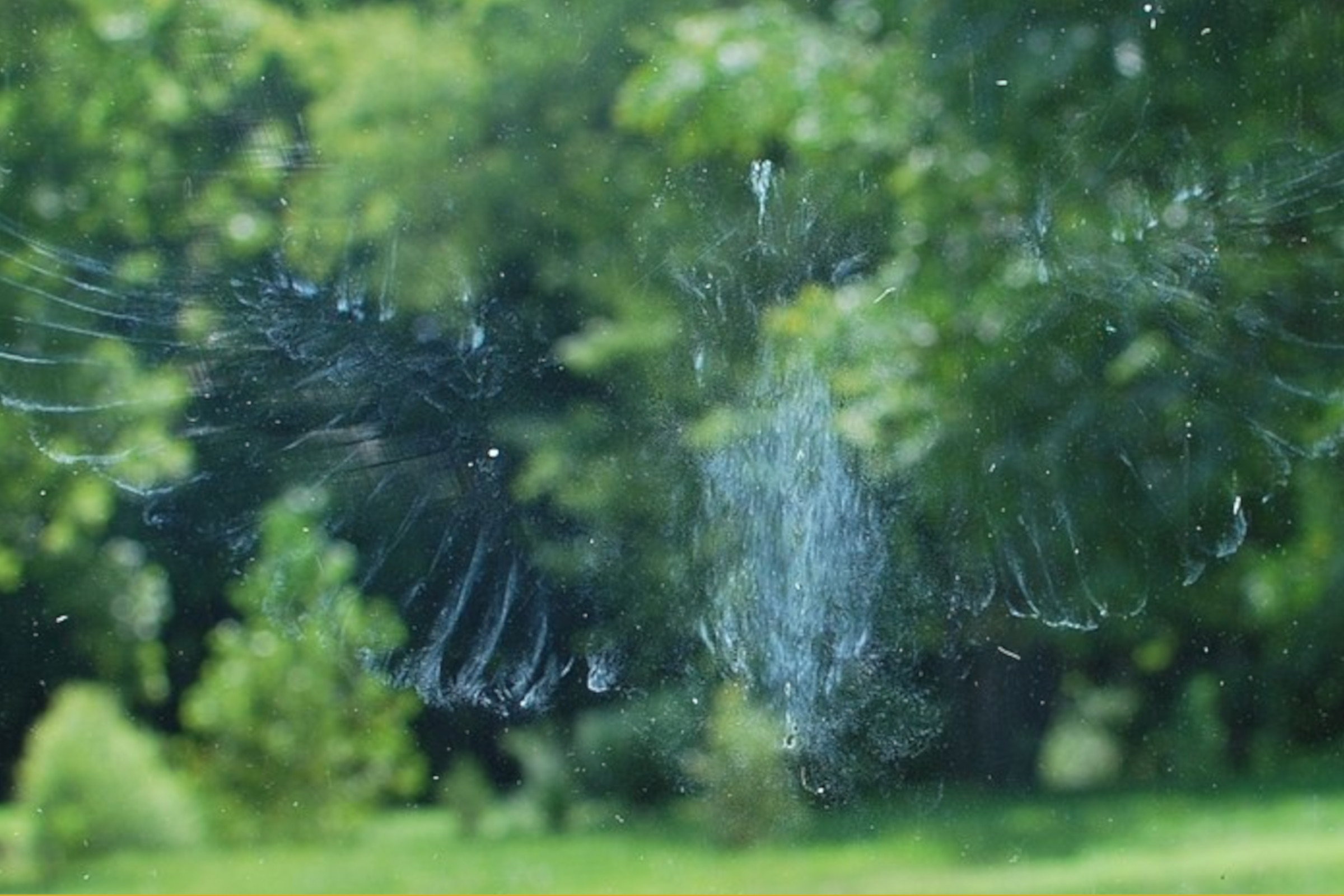 Bird Imprint on Window