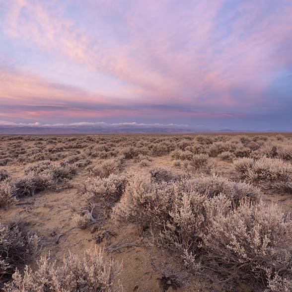 The sagebrush steppe at sunset.